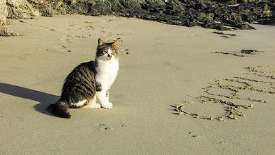 alasan kucing makan ikan