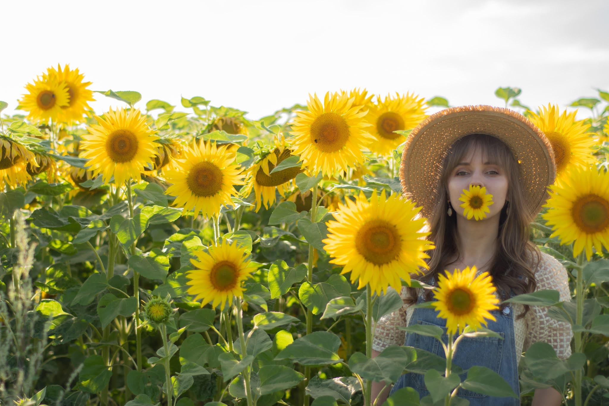 Pole słoneczników   małe rzeczy