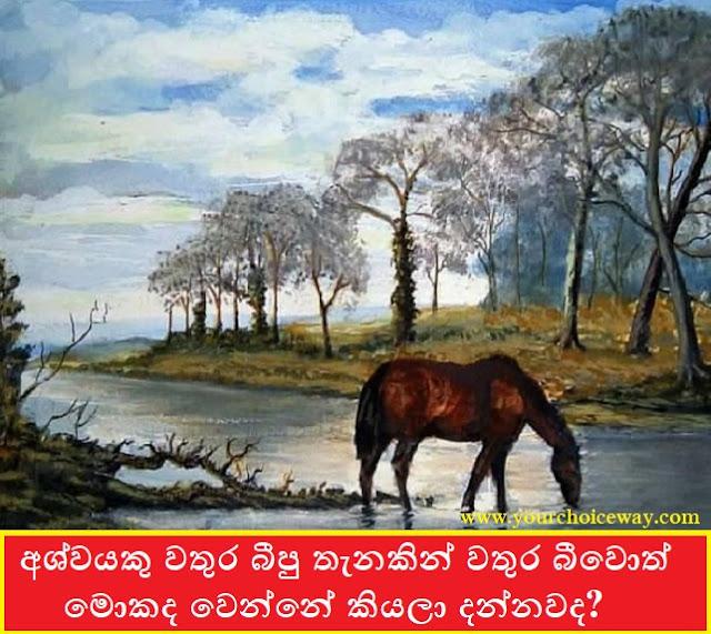 අශ්වයකු වතුර බීපු තැනකින් වතුර බීවොත් , මොකද වෙන්නේ කියලා දන්නවද (Do You Know What Happens If A Horse Drinks Water From A Water Place) - Your Choice Way
