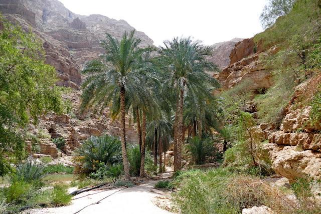 Wadi, Oman, Palmen, Oase, Bucketlist, Berge