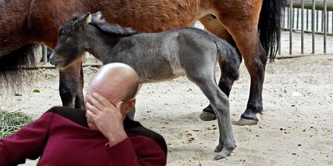 مفاجئة المصاب رقم صفر فى الصين كان يمارس الجنس مع الحيوان