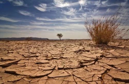 Κλιματική αλλαγή στην Ευρώπη: Τριπλάσιες οι απώλειες στη συγκομιδή λόγω της ξηρασίας