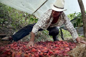 Conheça a pimenta defumada que cresce somente nas montanhas de Oaxaca no México