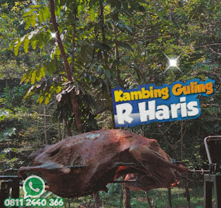 Kambing Guling Di Lembang Bandung   Enak, kambing guling di lembang bandung, kambing guling lembang, kambing guling bandung, kambing guling lembang bandung, kambing guling,