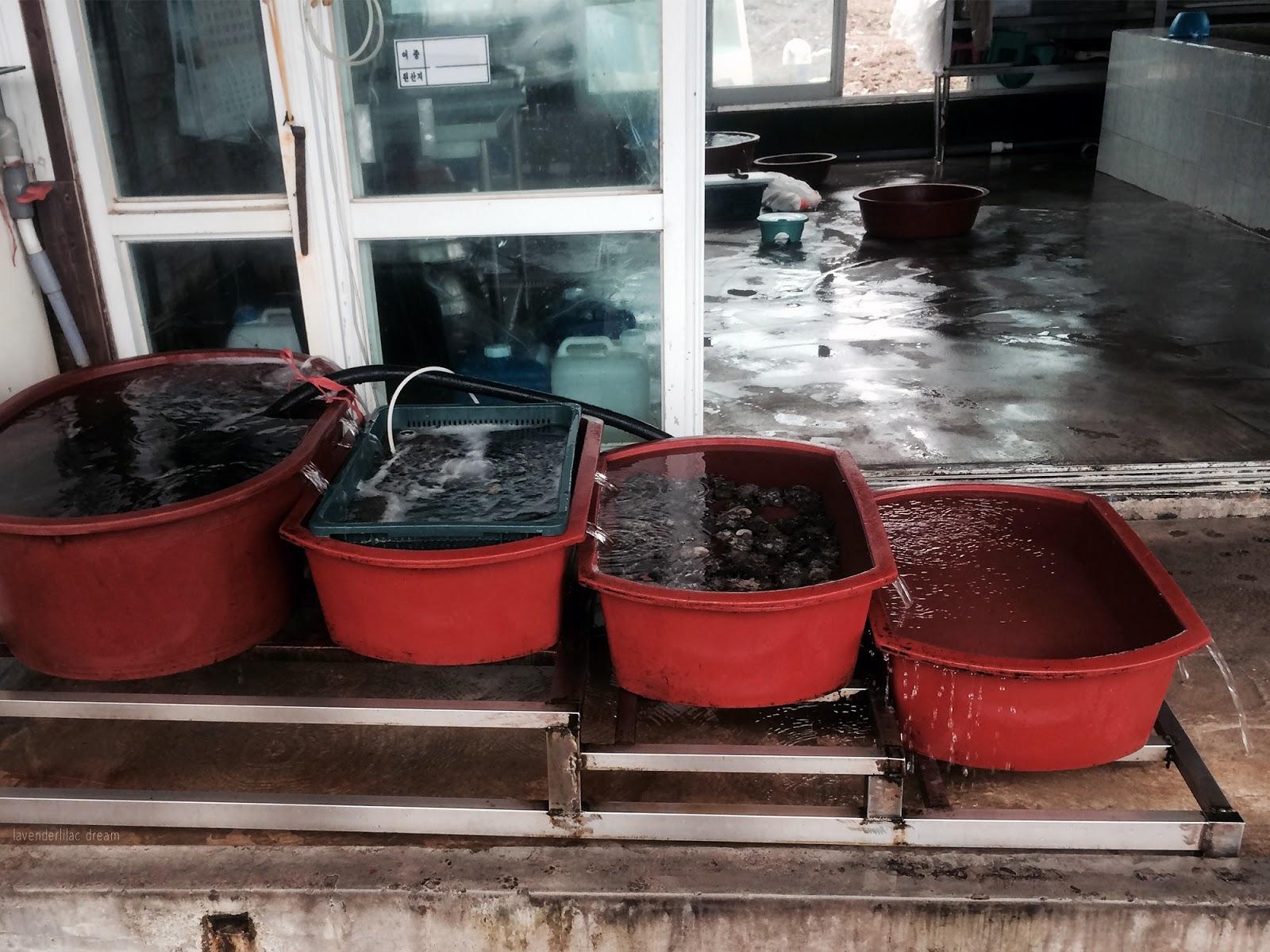 South Korea, Jeju Island, Yonsei University, YISS 2014, Seopji Coast seafood stall