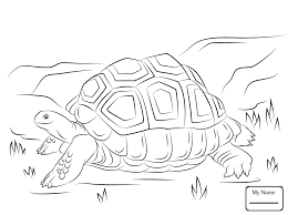Adorable Tortoise Coloring Sheet For Kids