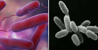 bacteria vs archaea