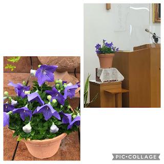2021.6.13主日礼拝「万物へのあわれみ」詩篇145篇