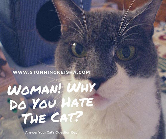 Woman! Why Do You Hate The Cat?