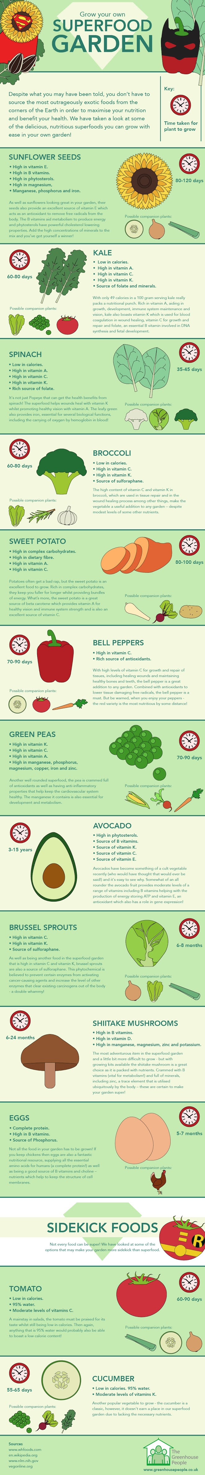 Grow Your Own Superfood Garden #infographic #Home & Garden #Superfood Garden