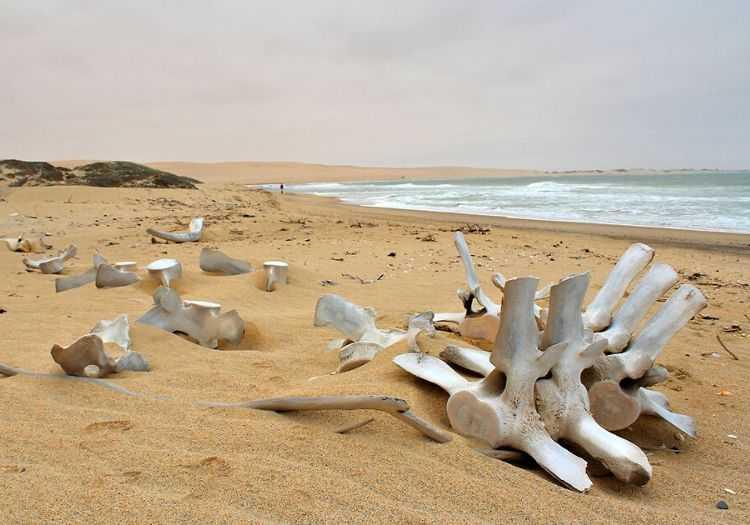 İskelet Sahili her türlü hayvan iskeletini bulabileceğiniz, vahşi hayvanların yaşadığı bir bölgededir.