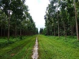 Tipe Hutan Berdasarkan Sosiologi Vegetasi