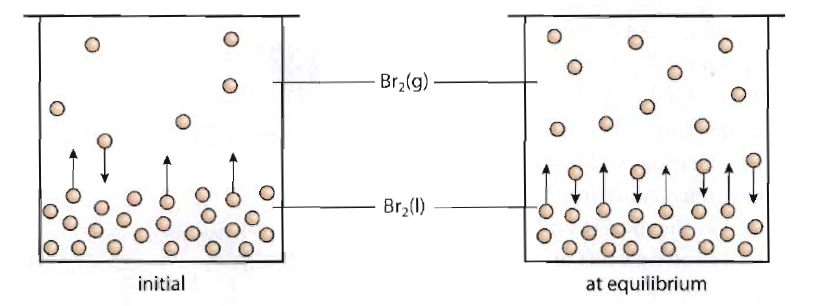 Nathalie Chemistry Blog: 7.1: Dynamic equilibrium