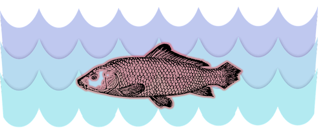streamline body of fish. ncert class 6 science chapter 8, body movements,