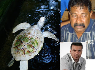 Kosgoda Rare albino turtle theft in 2013