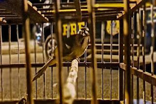 Aves são resgatadas e veículo roubado transportado em cegonha é recuperado, em Jequié