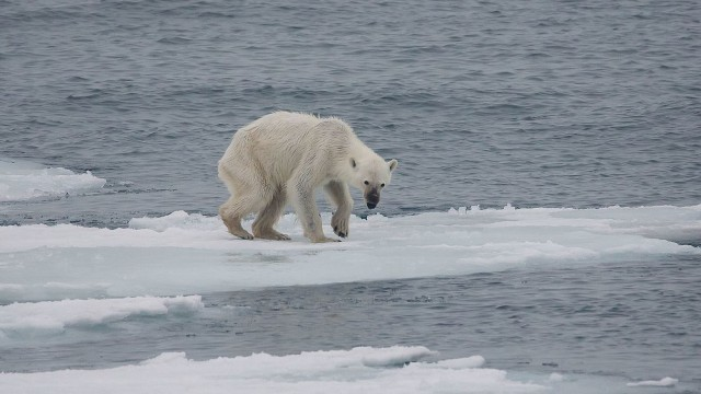 This Rare Photo of a Polar Bear Will Show You WHY We Need to Stand Up for the Planet