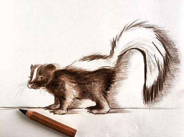 09-The-warning-form-a-skunk-Farbe-Und-Fabeln-www-designstack-co