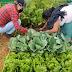Huertos de Agricultura Sustentable, fortalecen la economía local