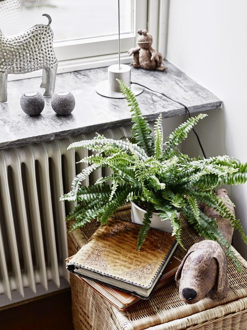 lovely fern plant