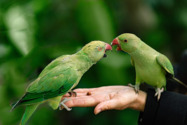 How to Buy a Pet Bird: 5 Important Things You Need To Know