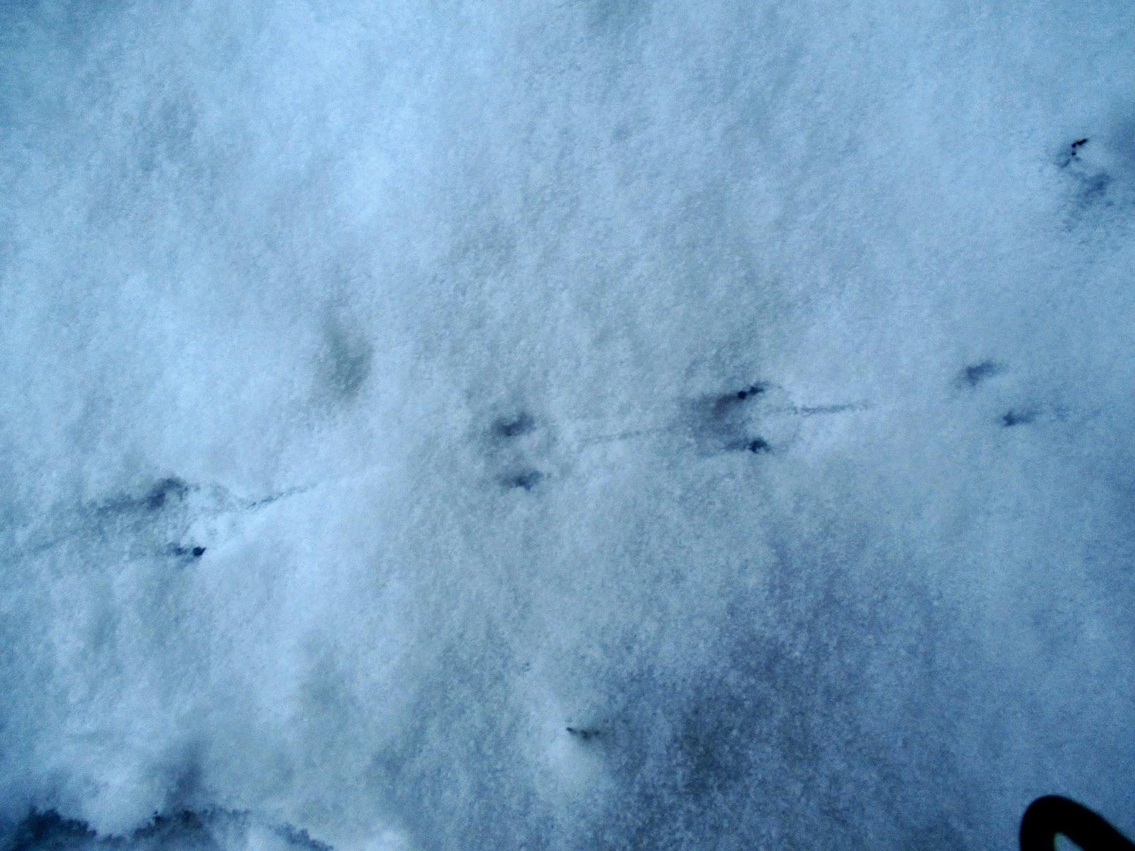 Oravan Jäljet Lumessa