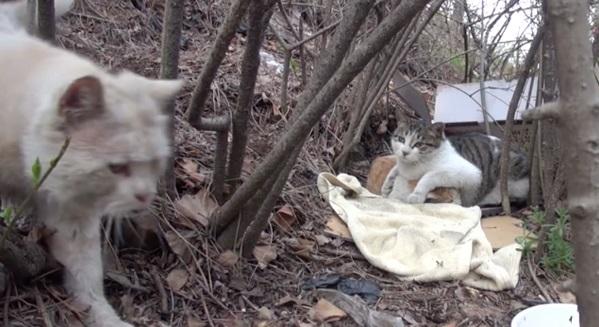 [VIDEO] Kisah Kucing Jaga 'Rakan' Cacat Sentuh Hati Netizen