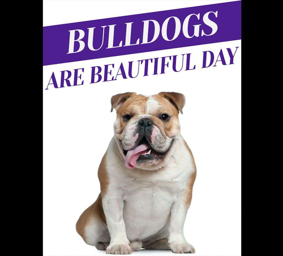 National Bulldogs Are Beautiful Day Wishes Lovely Pics