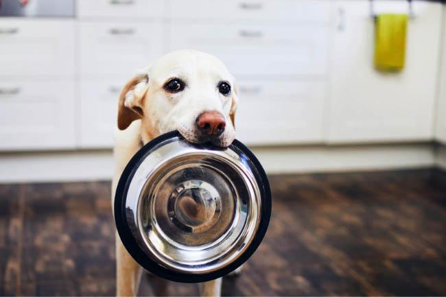 Dolina Noteci Premium karmy dla psów
