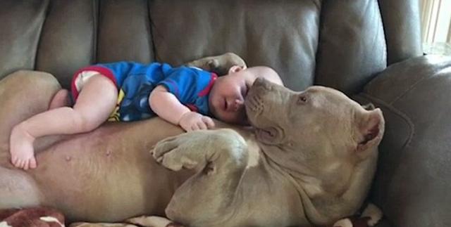 شاهدوا ماذا فعلت هذه الكلبة مع الرضيع ستعيدون مشاهدة الفيديو اكثر من مرة
