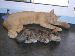 Mis gatos Neo y Travis