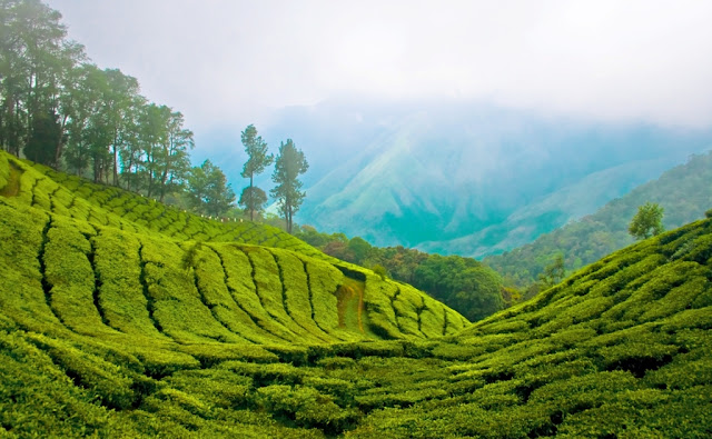 View from top station - Munnar Hill Station Kerala Pick, Pack, Go
