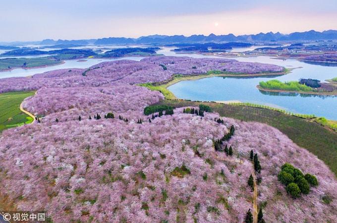 Hòn đảo hoa anh đào 'đẹp rụng rời' ở Trung Quốc - Ảnh 3