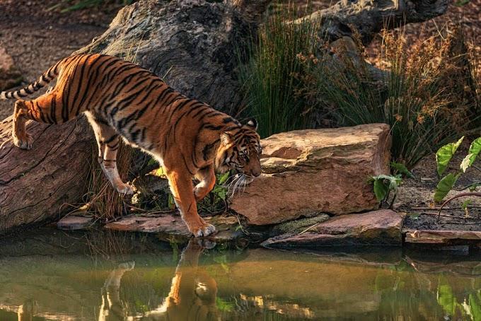 Jim Corbett National Park - India