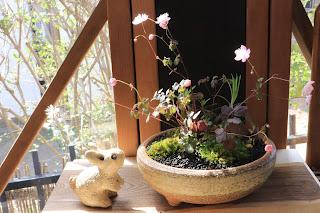 山野草盆栽(台湾バイカカラマツが咲いている)とうさぎの人形