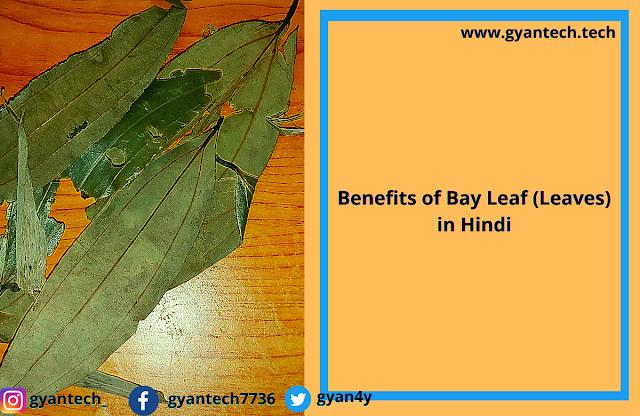 10 फायदे तेज पत्ता के ।  Benefits of Bay Leaf (Leaves) in Hindi