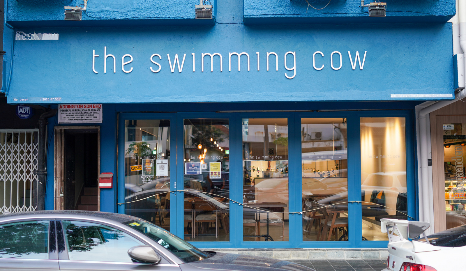 the swimming cow, damansara kim