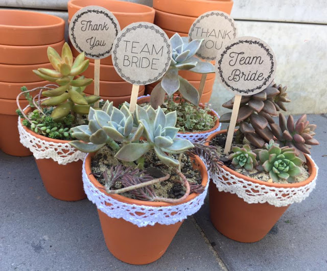 ECO FRIENDLY SUCCULENT GIFTS AND WEDDING FAVOURS AUSTRALIA Q&A