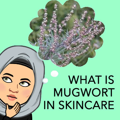 What is Mugwort in Skincare