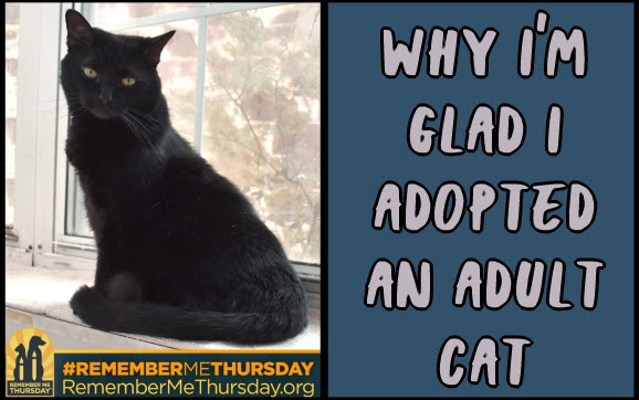 Why I'm glad I adopted an adult cat #RememberMeThursday