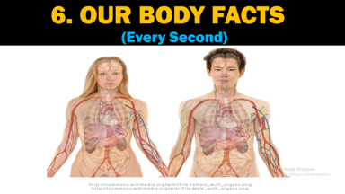 Human Body Facts Every Second, Human Body Facts, Every Second