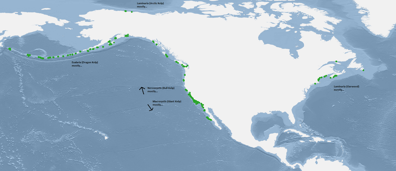 Kelp Forests of North America