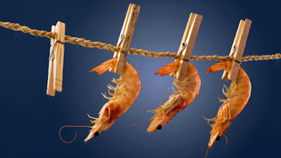 THE STUDY OF FUNGAL QUALITY OF FRESH SHRIMP