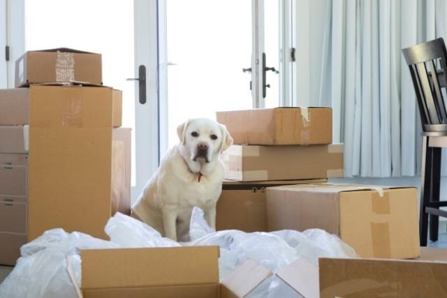 Comment-aider-votre-chien-a-sadapter-a-une-nouvelle-maison