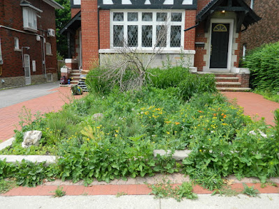 Midtown Toronto  Front Garden Cleanup Before by Paul Jung Gardening Services Inc.--a Toronto Gardening Company