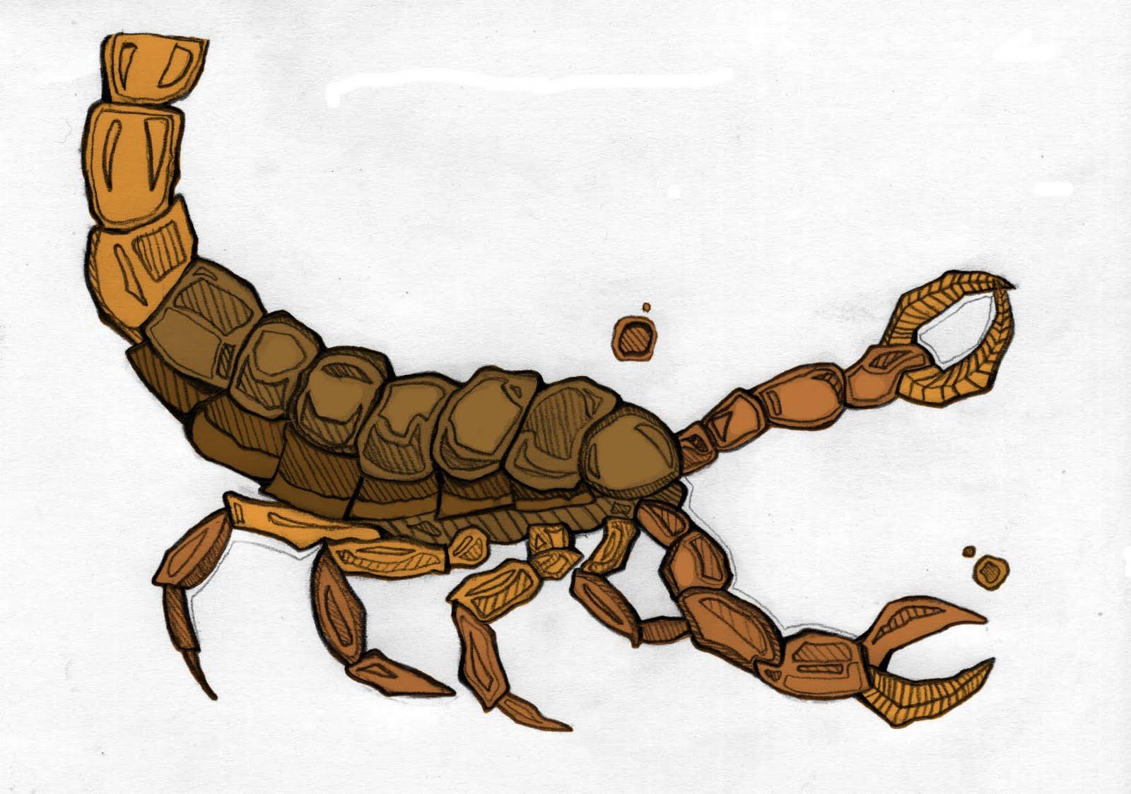 Dibujos De Escorpiones A Lapiz Imagui