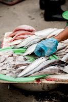 How to setup a fish farming business in nigeria