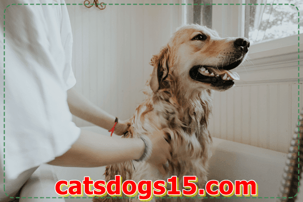 adopt a dog,adopt a small pet,rescue dogs,dog shelters near me