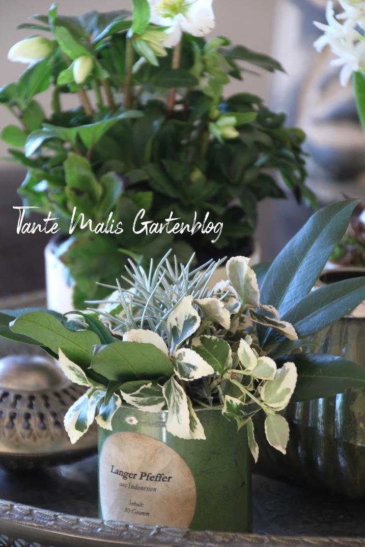 Christrosen und ein Strauß aus Gartenblumen im Januar