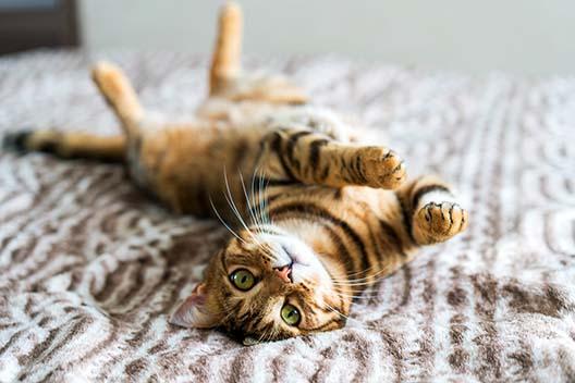 Co zrobić z kotem w czasie ferii zimowych?